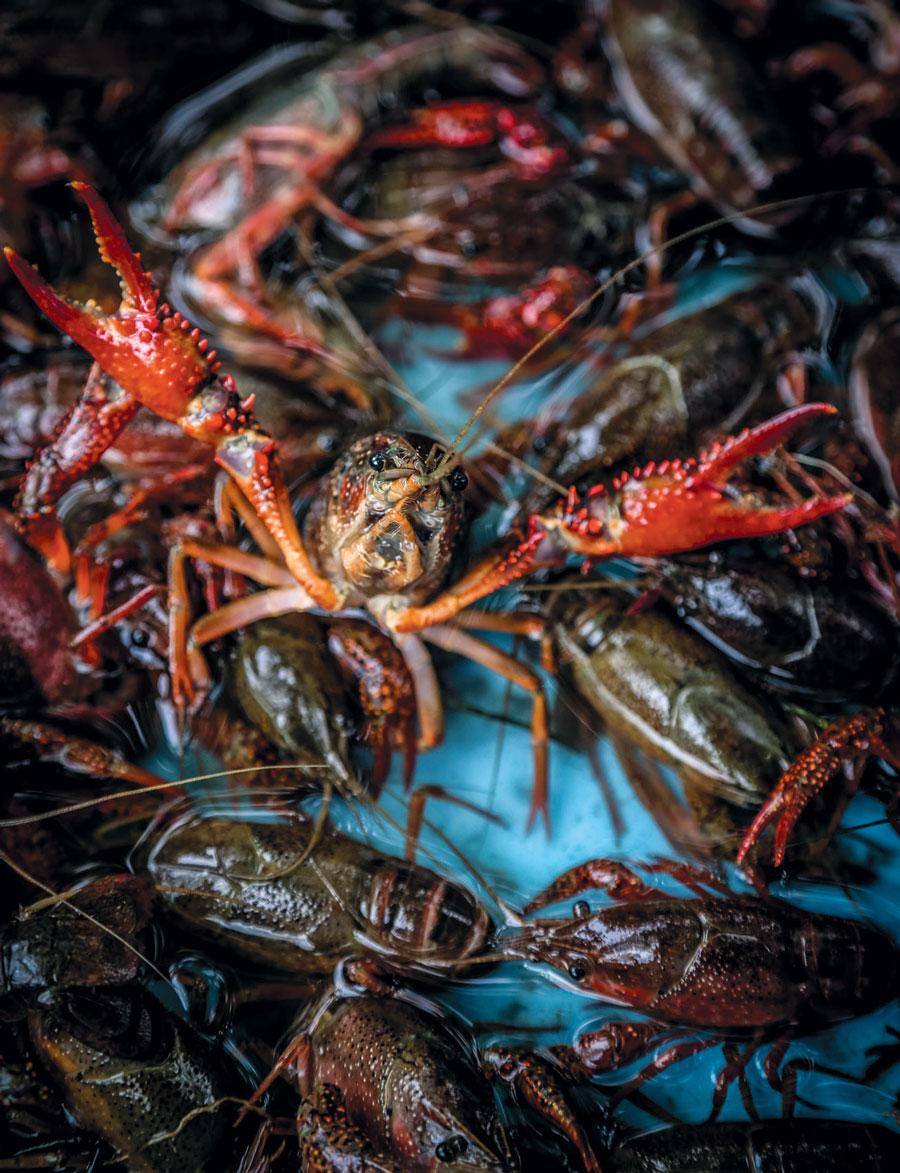 Cajun-Style Crawfish Boil | Edible Houston