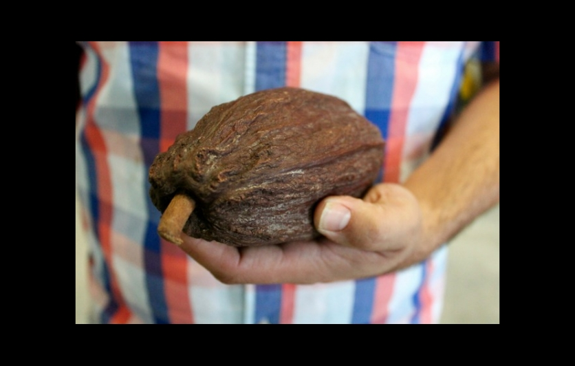 cocoa bean, chocolate