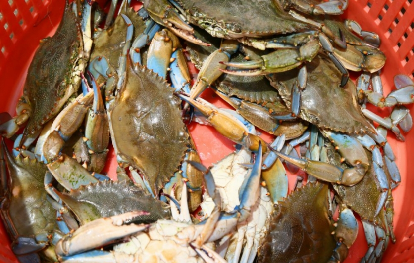 blue crabs, trinity bay
