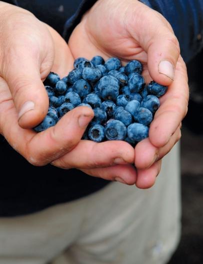 blueberries, handful blueberries