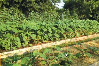 permaculture, garden