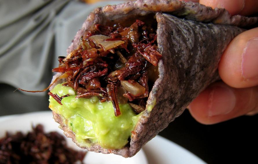 Chef Hugo Ortega's Chapulines Tacos